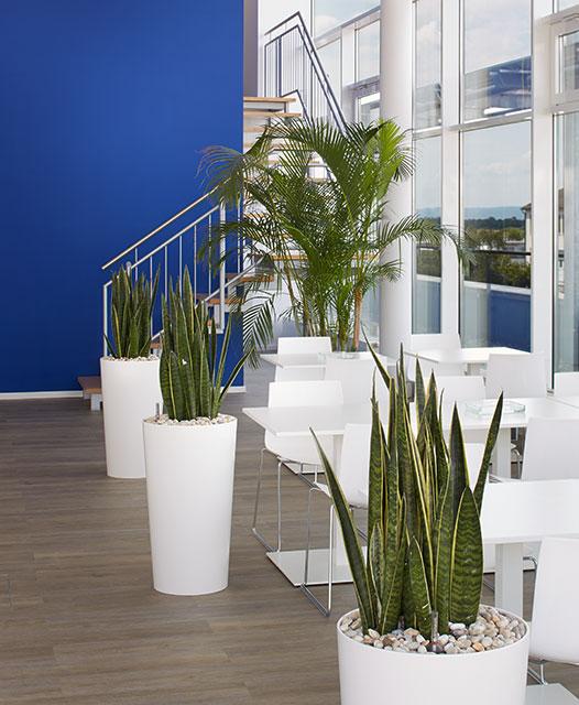 Interiorfotografie Fabian Aurel Hild für Hydroflora bei Sony, Frankfurt